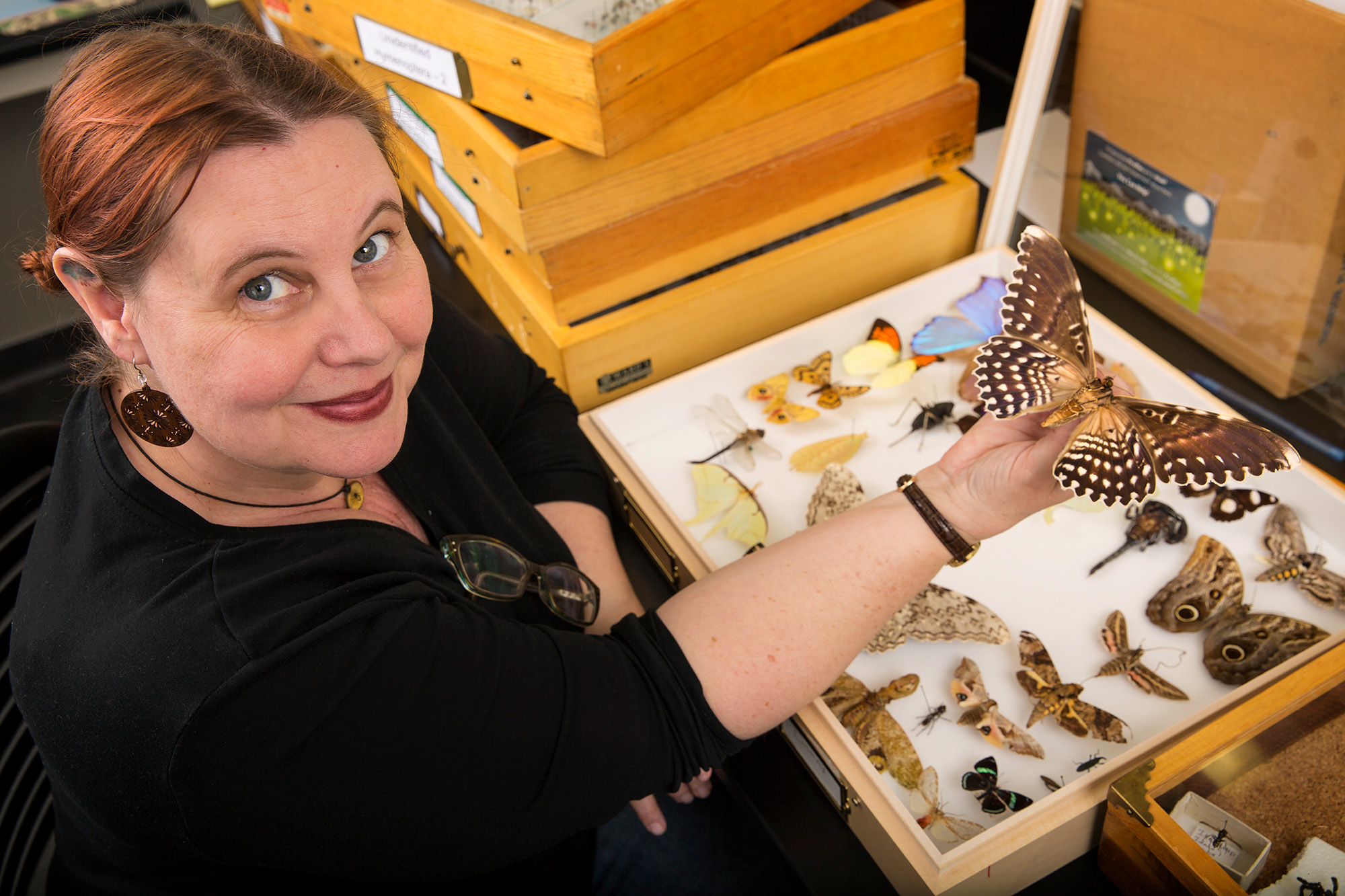 Entomologist Christy Bills holds a moth in a lab at NHMU.