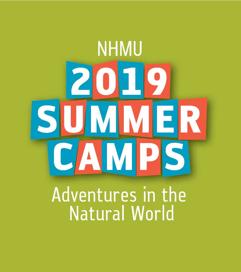 NHMU Summer Camps | Natural History Museum of Utah