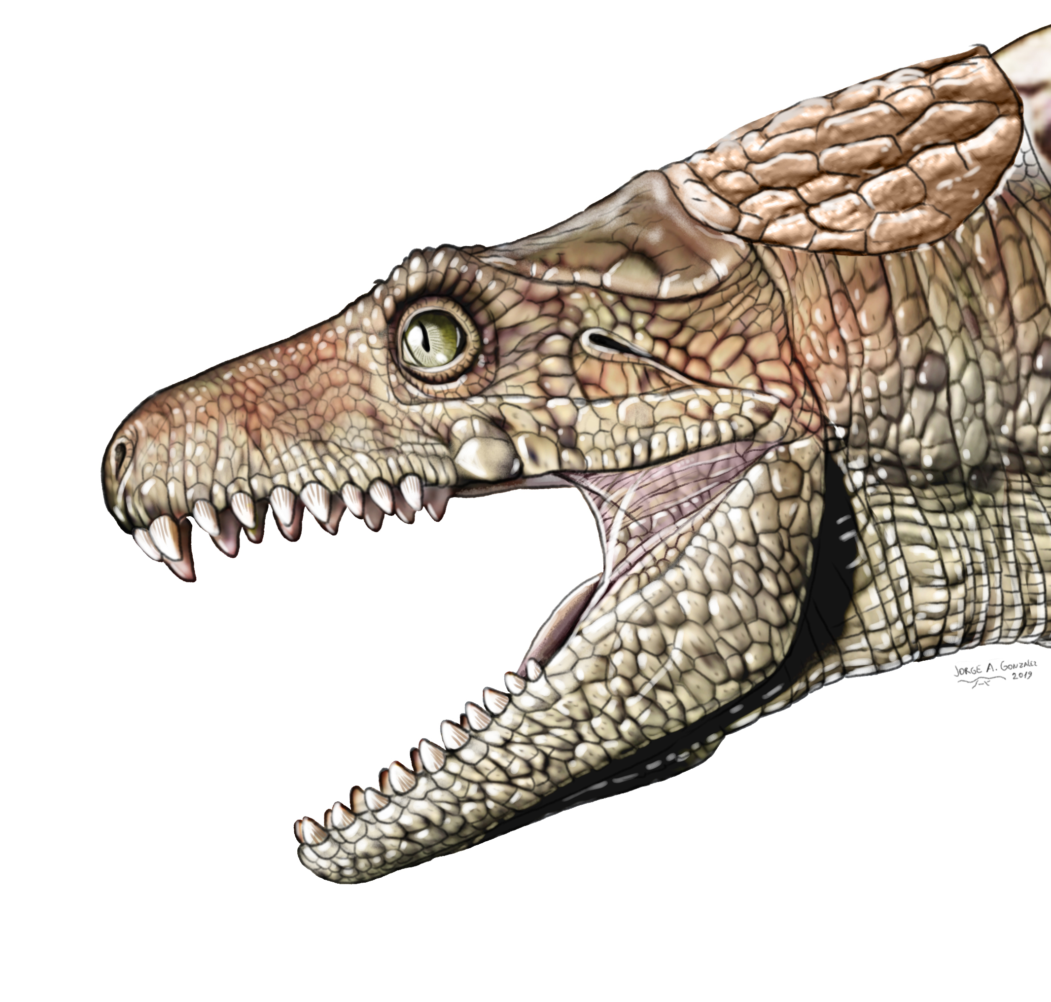 Armadillosuchus illustration