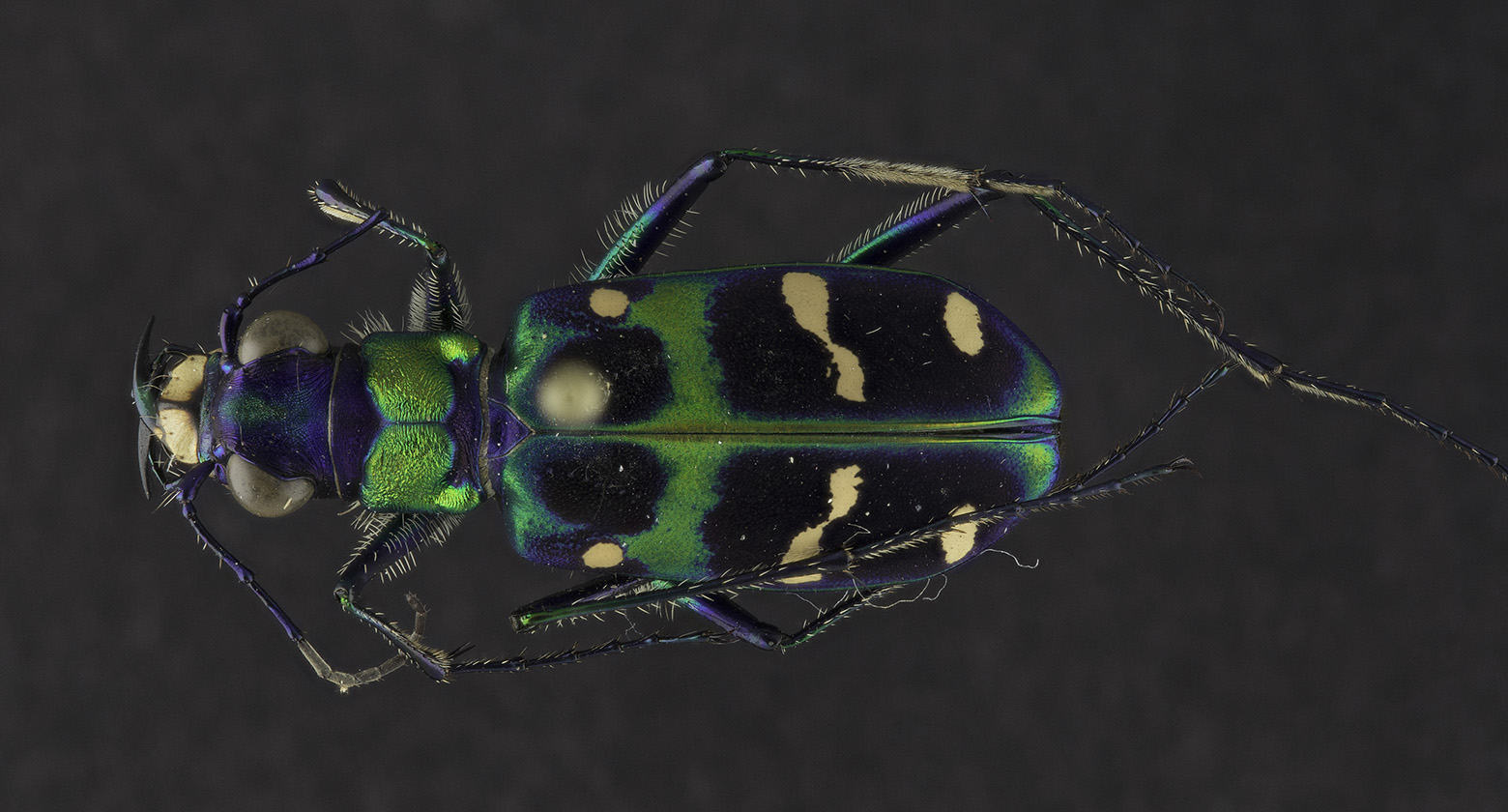 [image] Grand Photos of Humble Bugs: Digitizing our Entomology Collection