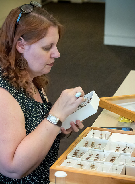 Christy Bills examining insect collections