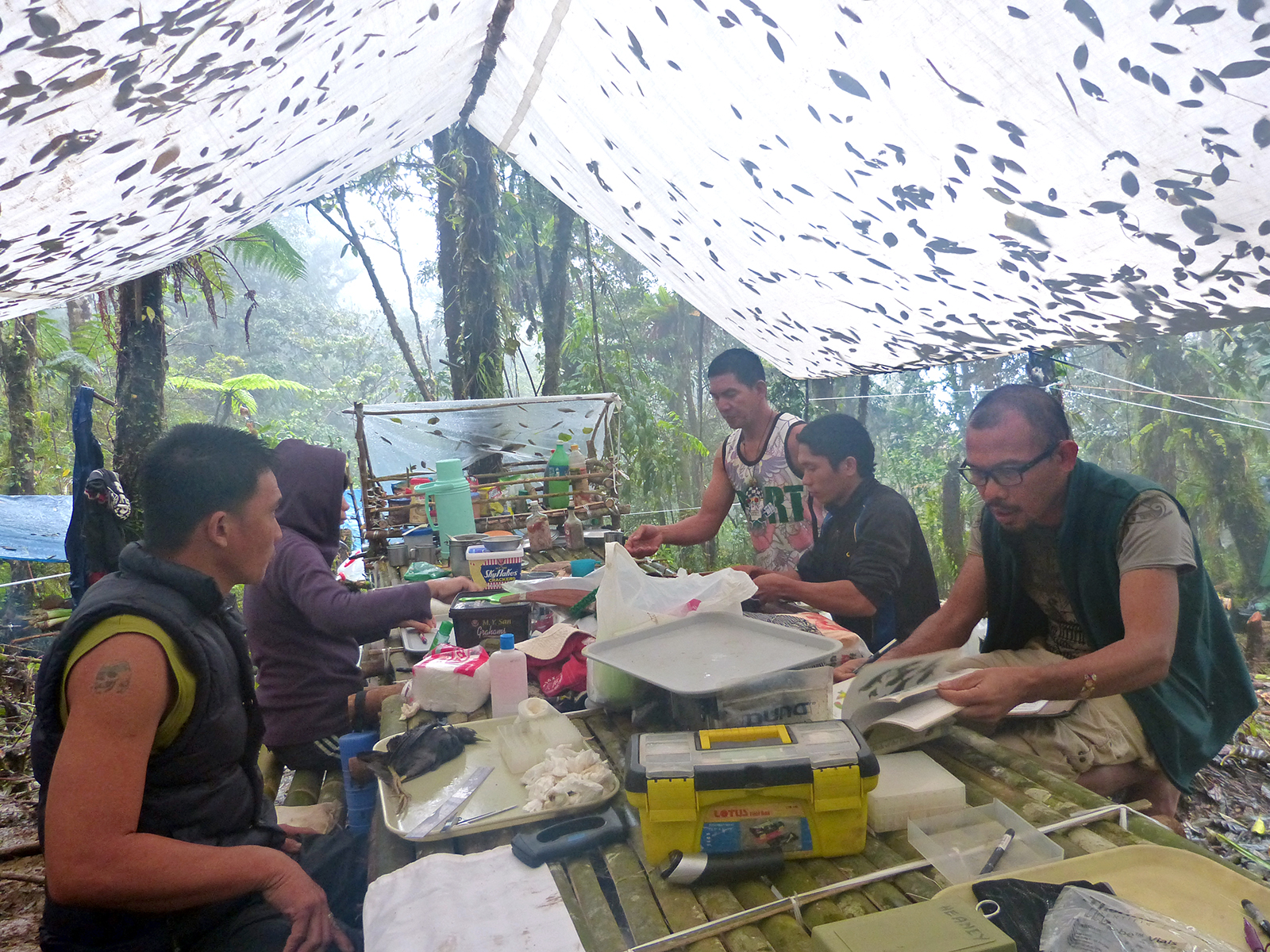 Fieldwork team working at table under a canopy top