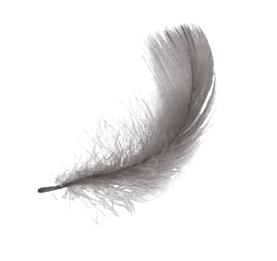 Image of a grey feather