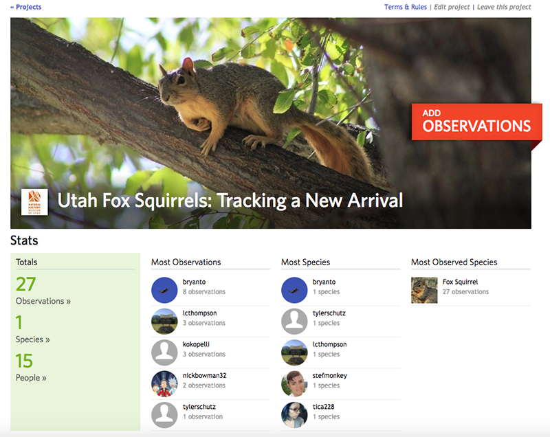NHMU's iNaturalist Fox Squirrel Project page. © NHMU.