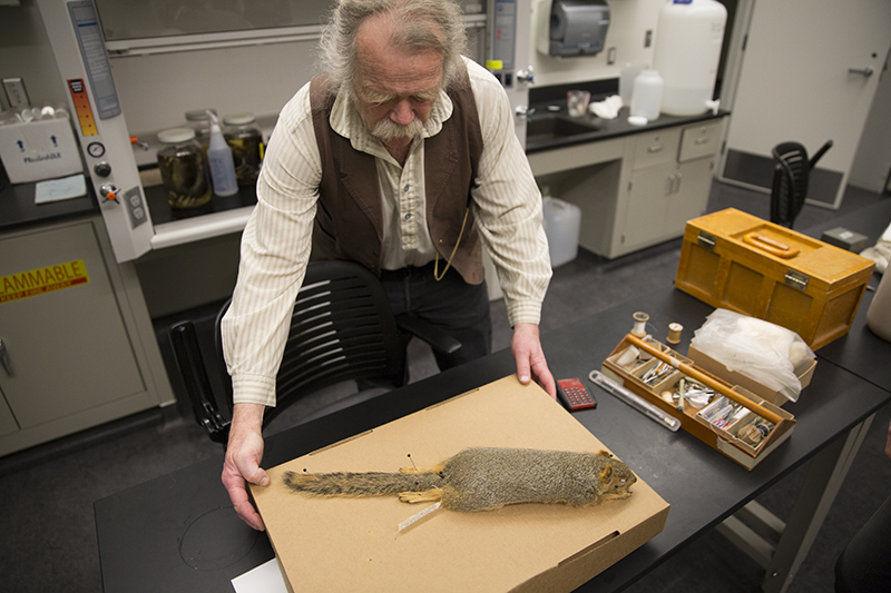 Eric Rickart displays a prepared fox squirrel specimen at NHMU. Photo © NHMU