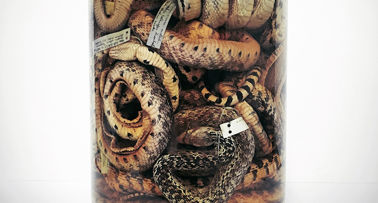 [image] Jar of Snakes