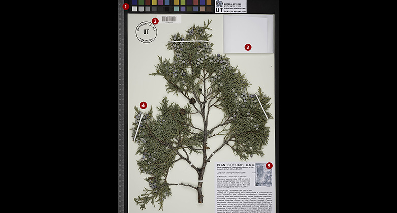 [image] Decoding a Herbarium Sheet