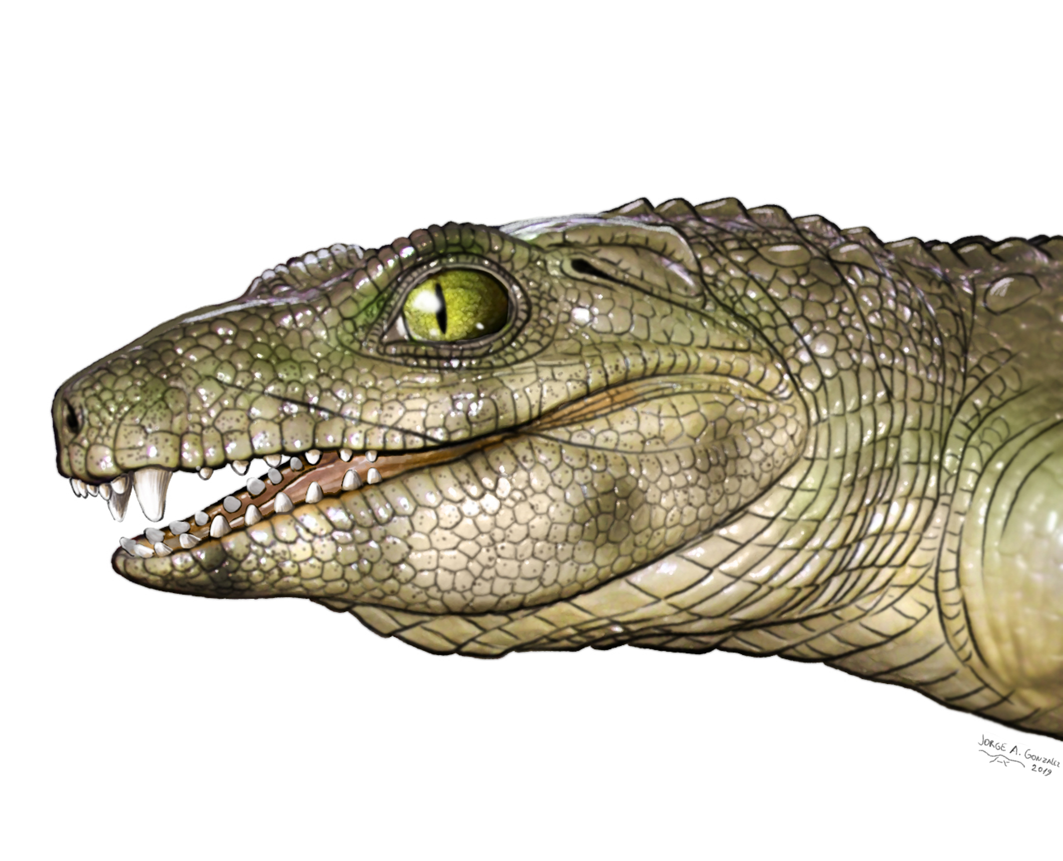 Notosuchus illustration
