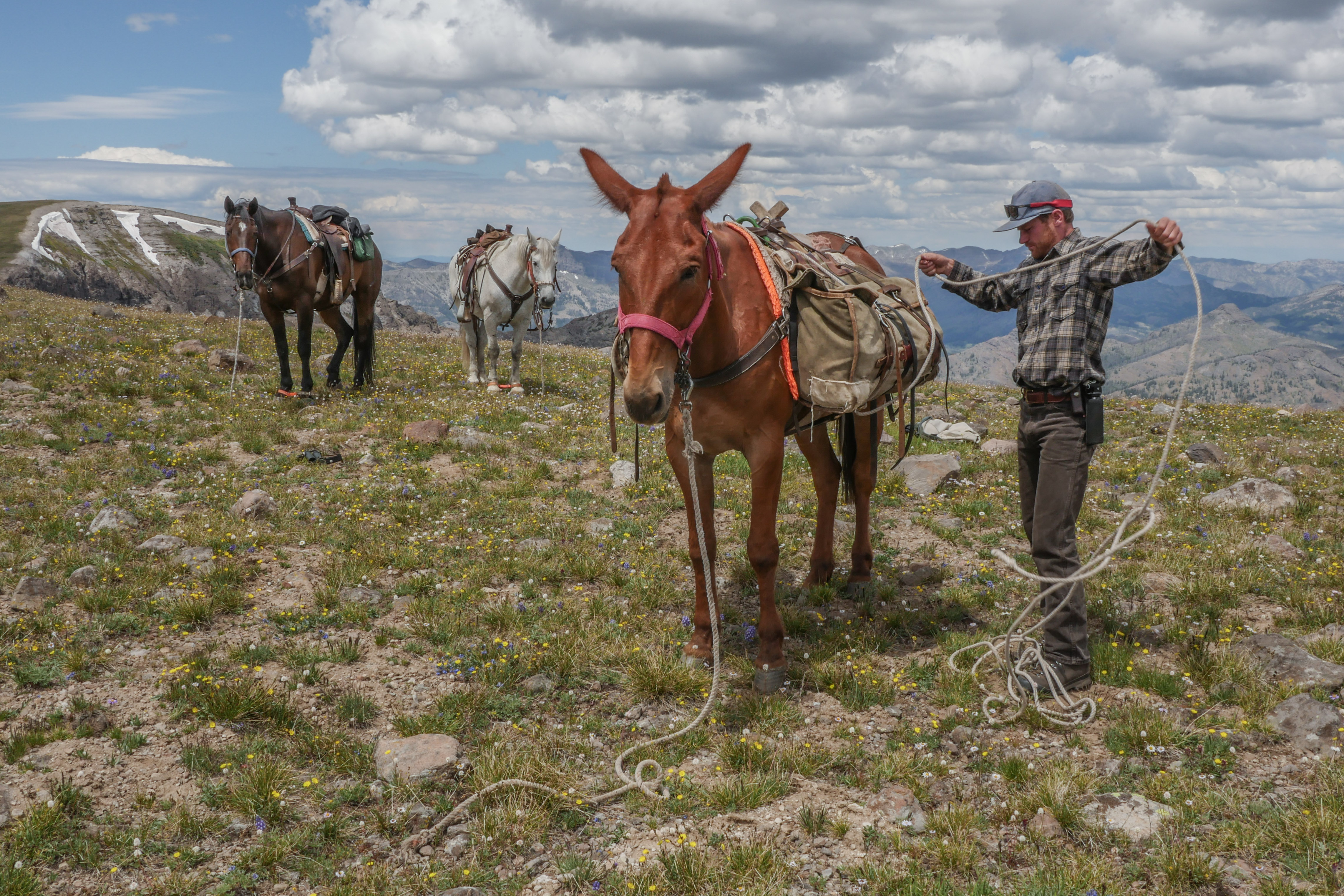Photographer Joe Riis untangling rope carried by one of his pack mules.
