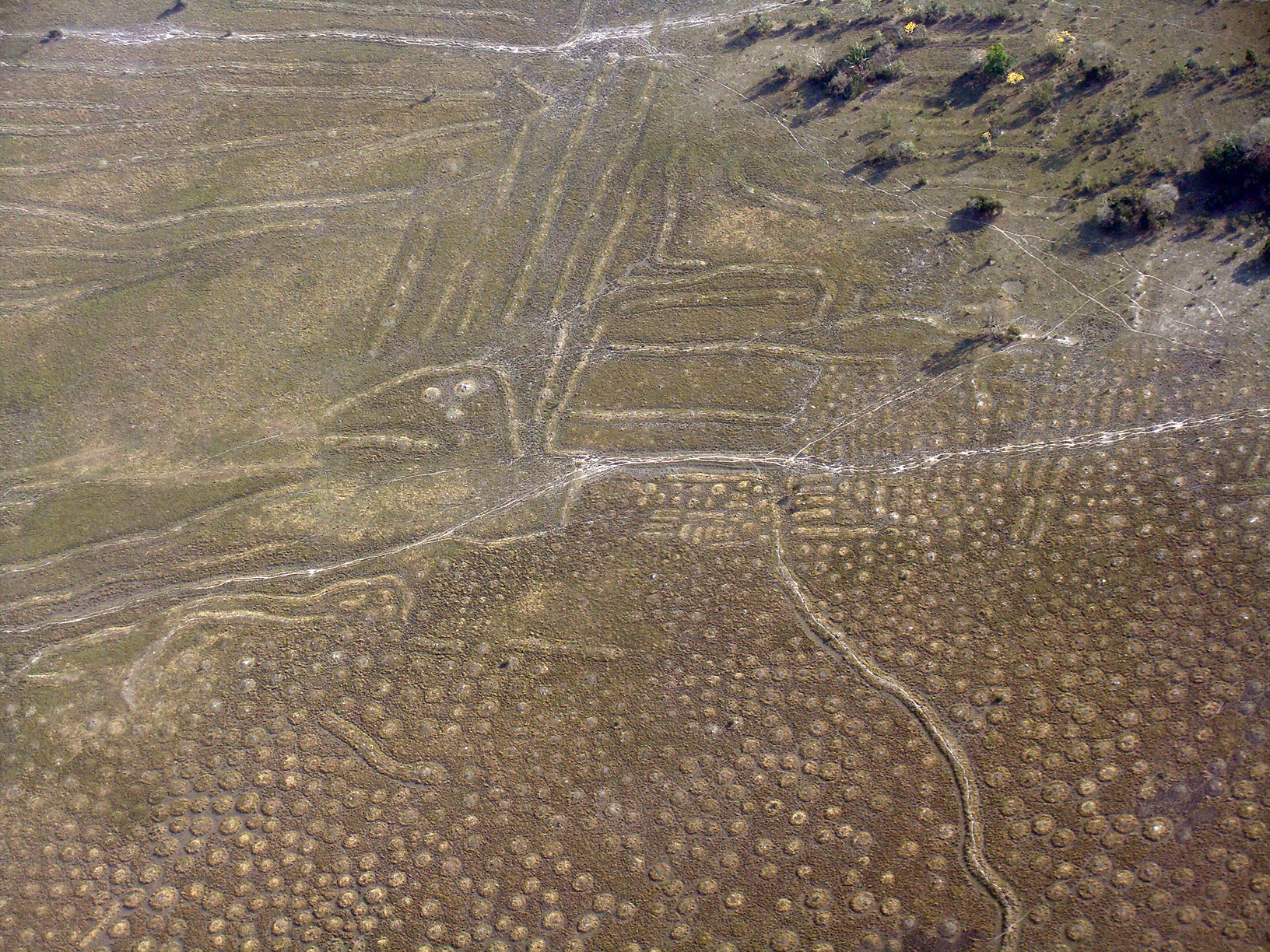 Aerial image of raised fields in Bolivia