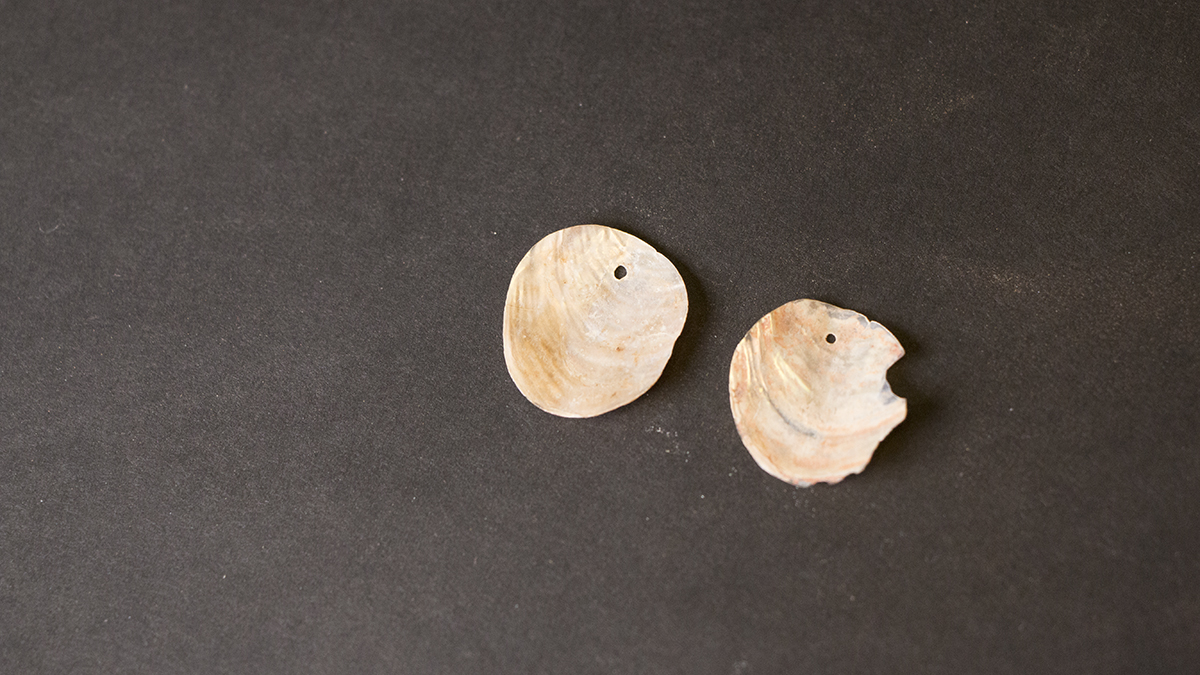 Shell Earings discovered at Baker Village. Exotic objects like shell are evidence of a broad trade network.Photo © NHMU.