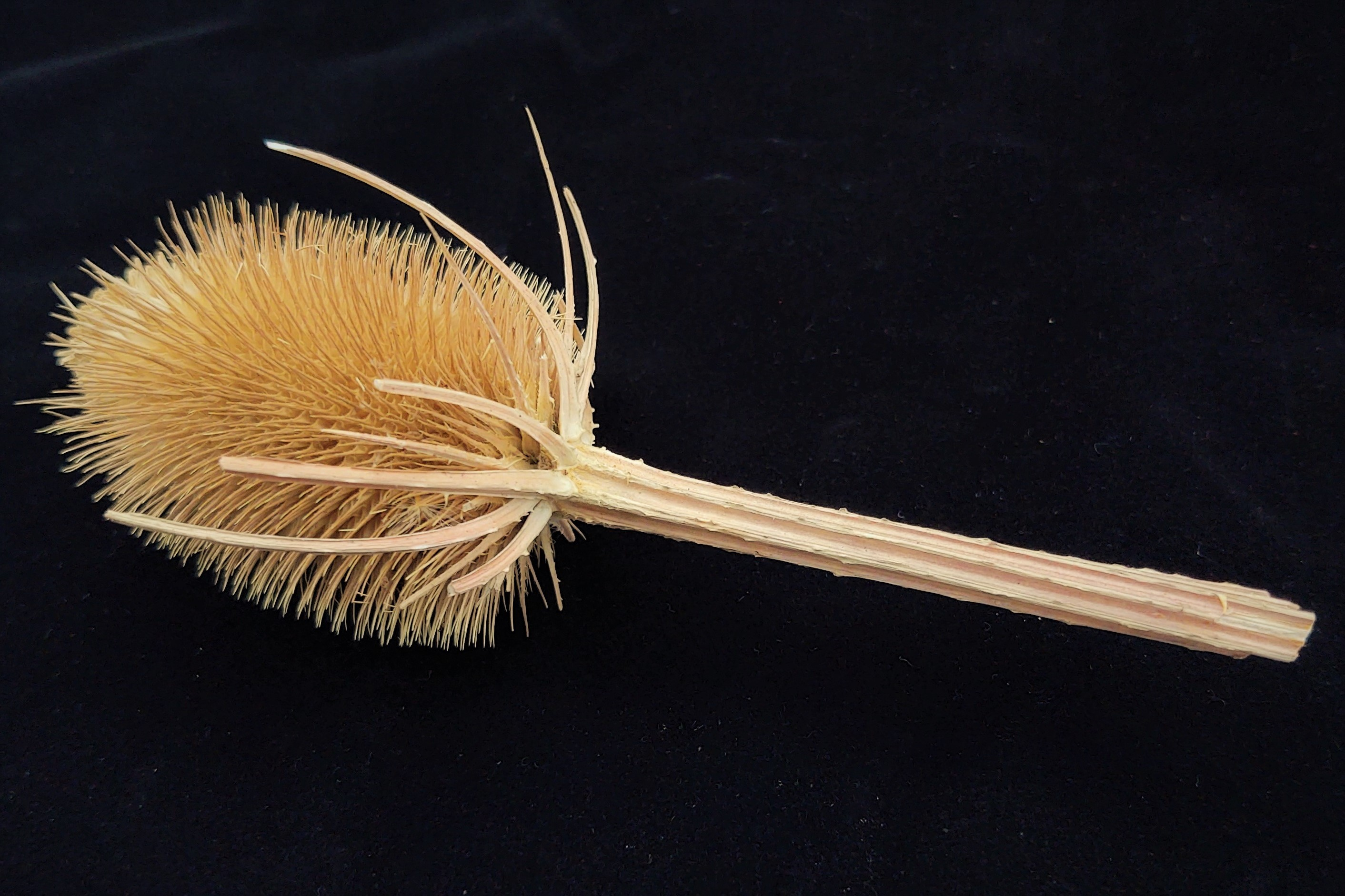 A prickly plant