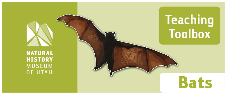 Teaching Toolbox: Bats