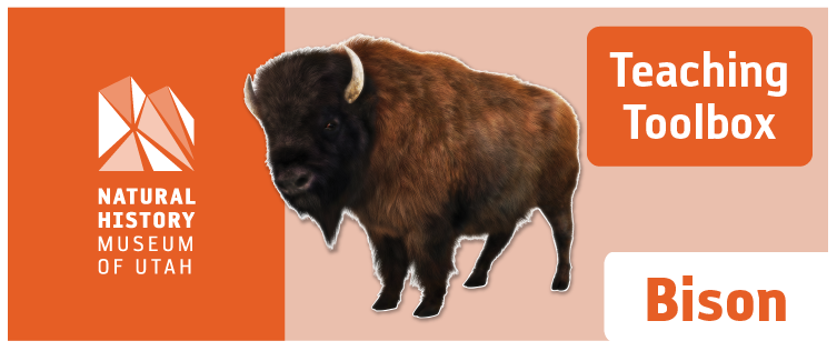 Teaching Toolbox: Bison