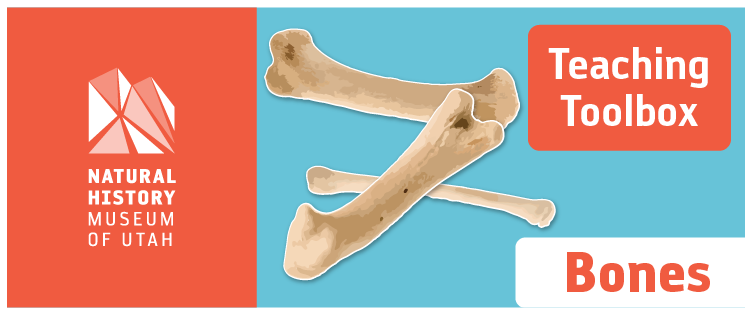 Teaching Toolbox: Bones