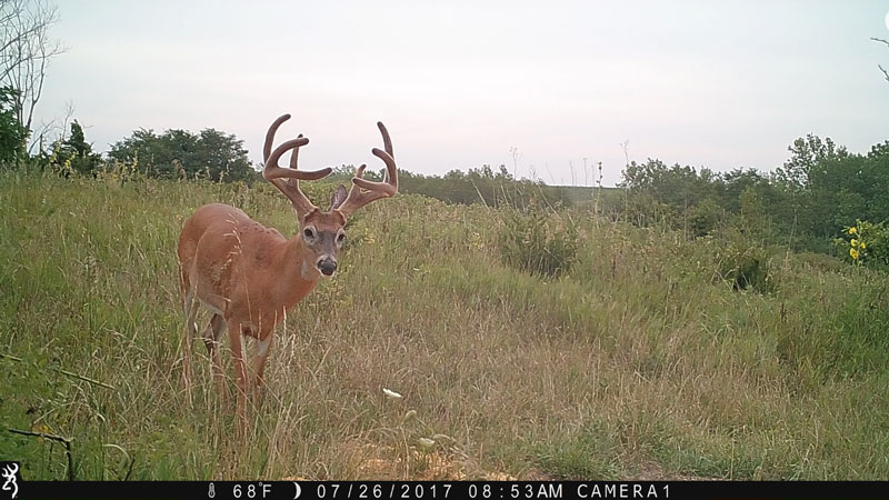 A photo of a deer in a field captured by a trail camera.