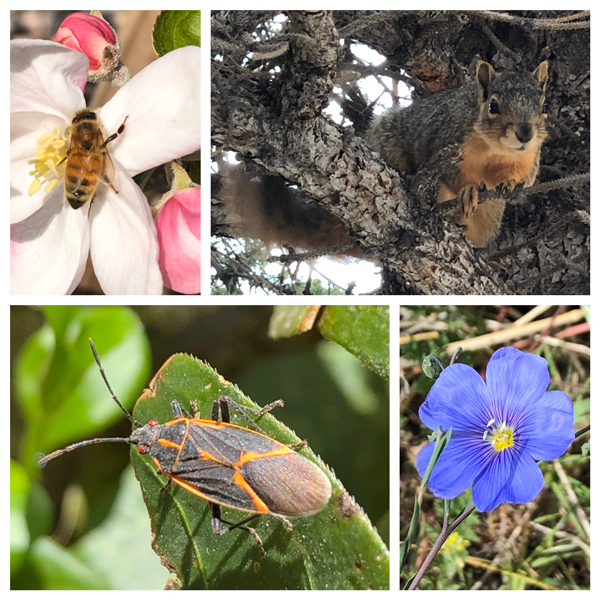 Collage of plants, animals, and insects.