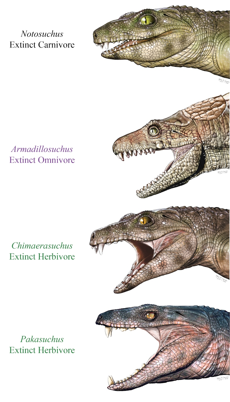 Restorations of extinct crocodile relatives with teeth suited to eating meat, plants, or both.