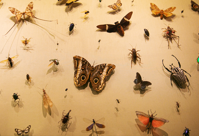 insects on display in a museum.