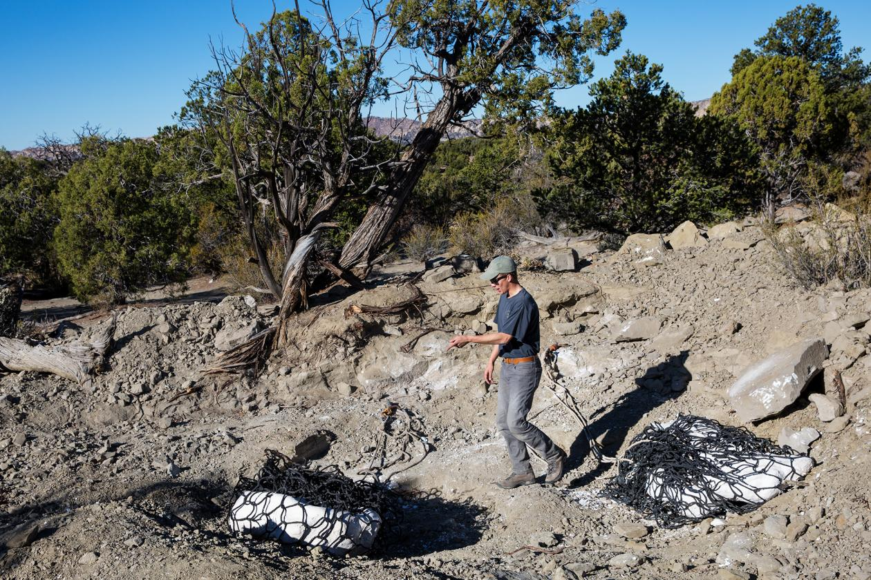 [image] Utah Tyrannosaur Discovered After 76 Million-Year Slumber