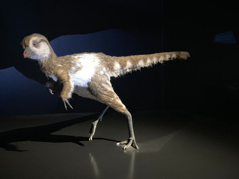 A model of a baby Tyrannosaurus, covered in wispy feathers.