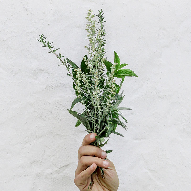 A hand holding herbs.
