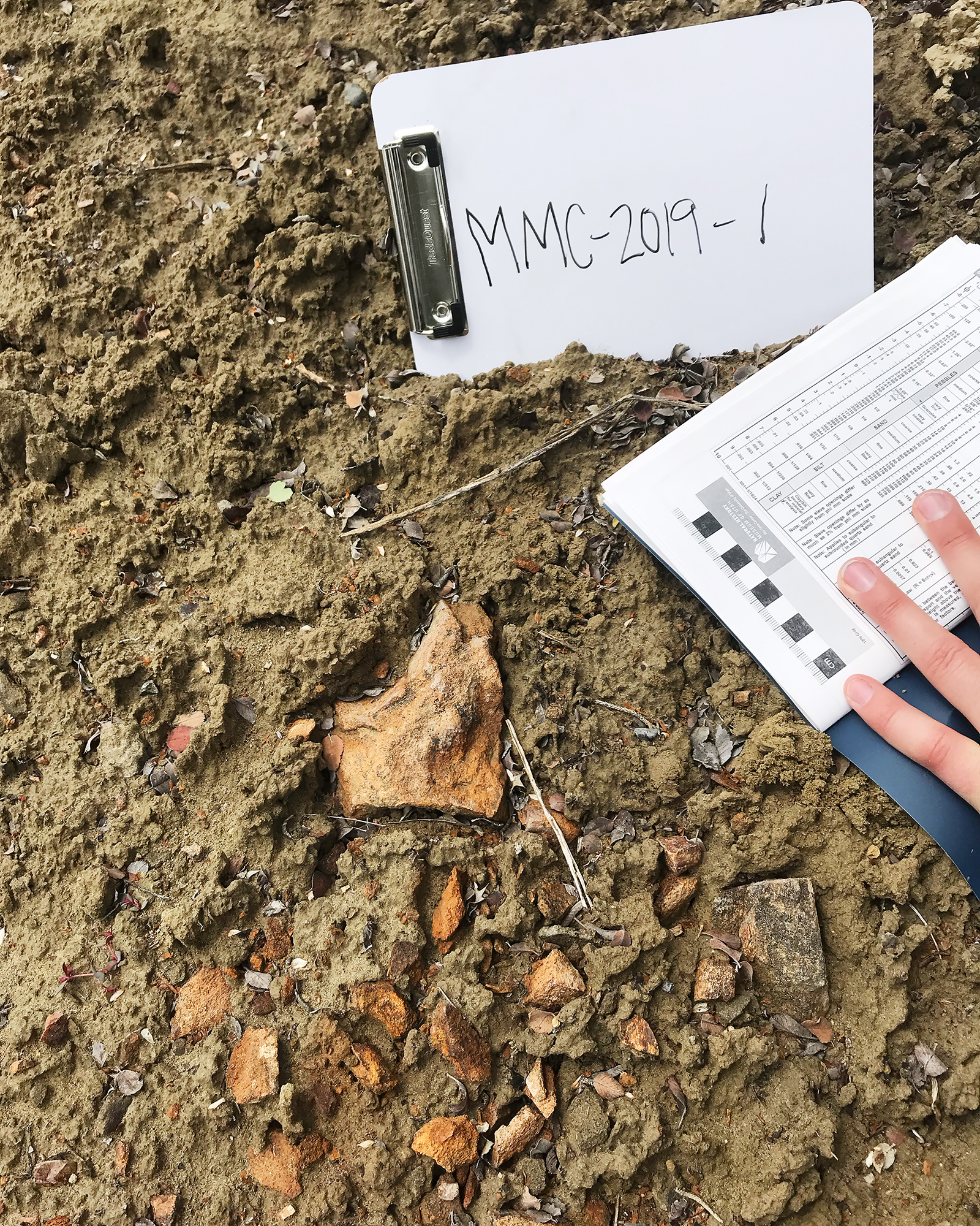 Orange-colored fossils contrast with the dirt around them.