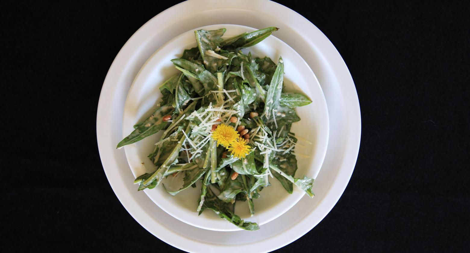 [image] Dandelion Greens with Roasted Garlic Dressing — A Nature All Around Us Recipe