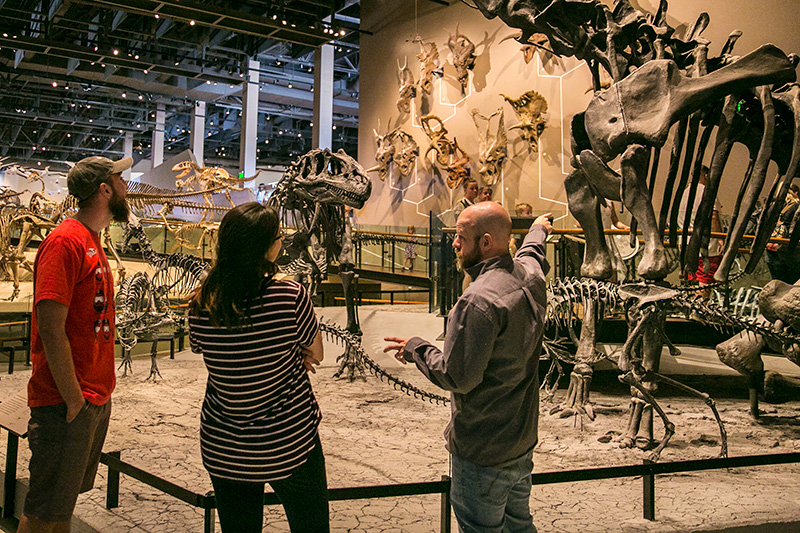 A museum guide points out dinosaur fossils to guests in a gallery at a museum.