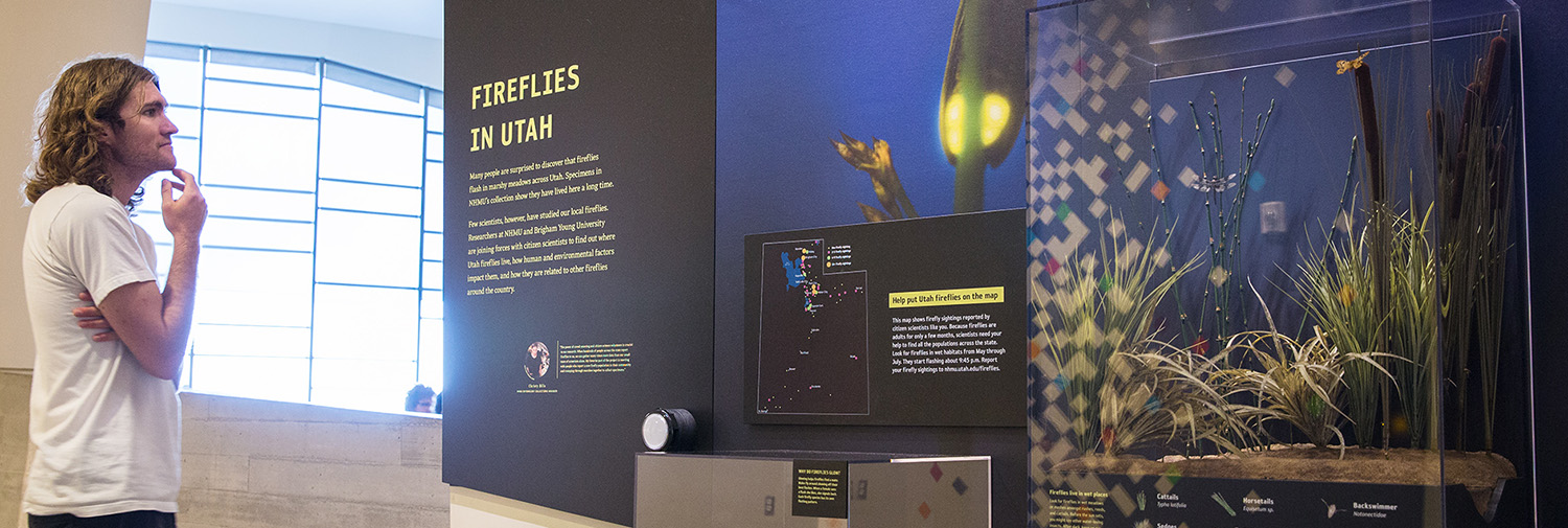 Utah's fireflies are featured in the News From Our Scientists exhibit at NHMU.
