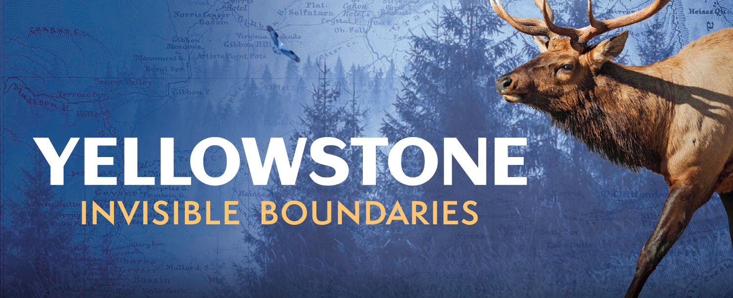 "An elk and the title ""Yellowstone, Invisible Boundaries."""