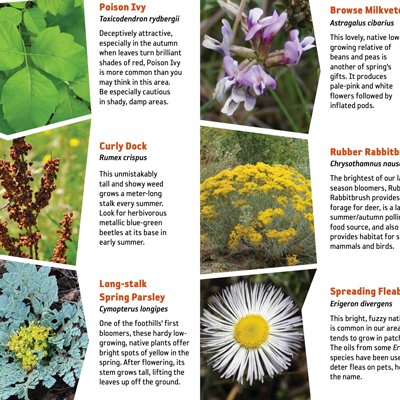 A plant guide.