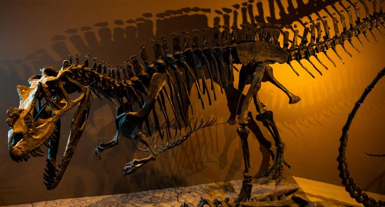 image of Ceratosaurus as seen in the Museum's Past Worlds Gallery.