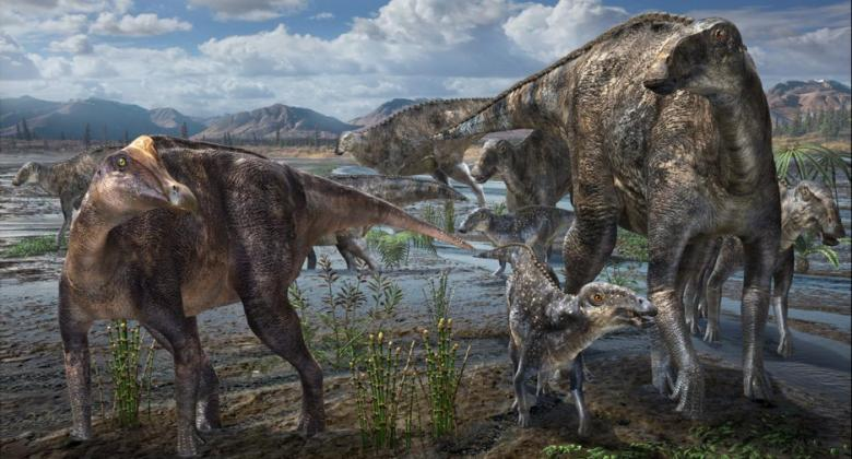 A group of duckbilled dinosaur on a wet floodplain in ancient Alaska. Some have smooth heads and duck-like bucks, and one has a crest on its head.