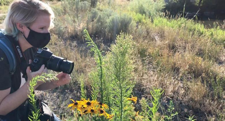 A citizen scientist crouches with a camera need shrubs with a spider web to gather images for the spider bioblitz.