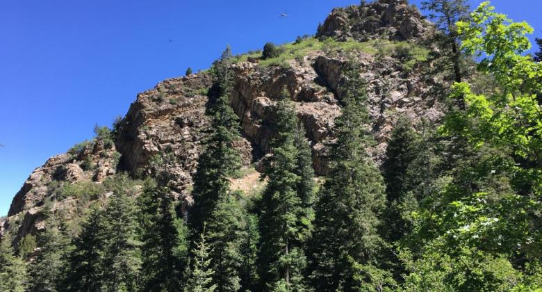 Rock crags and pine trees in a Wasatch Front forest.