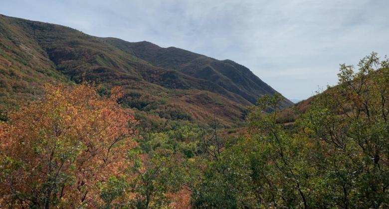 A view of the Wasatch Front, showing tall hills and autumn foliage in the foreground