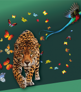 A leopard and butterflies on a green background.