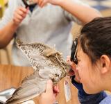 A student looks at a bird wing using a magnifying glass.