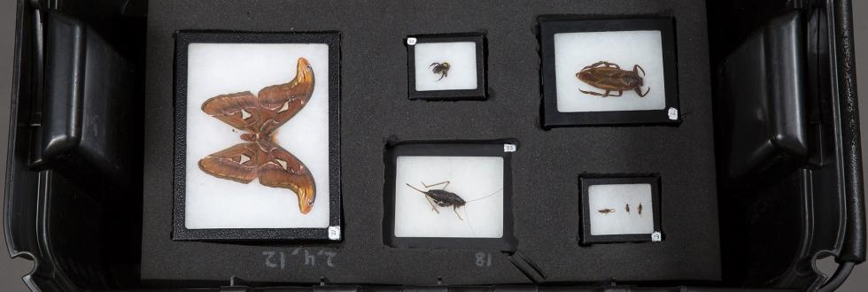 Teaching Toolbox: Insects