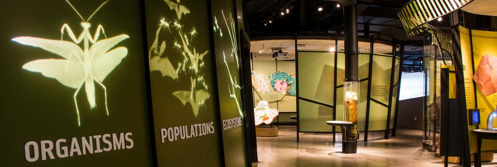 The Life Gallery at NHMU.