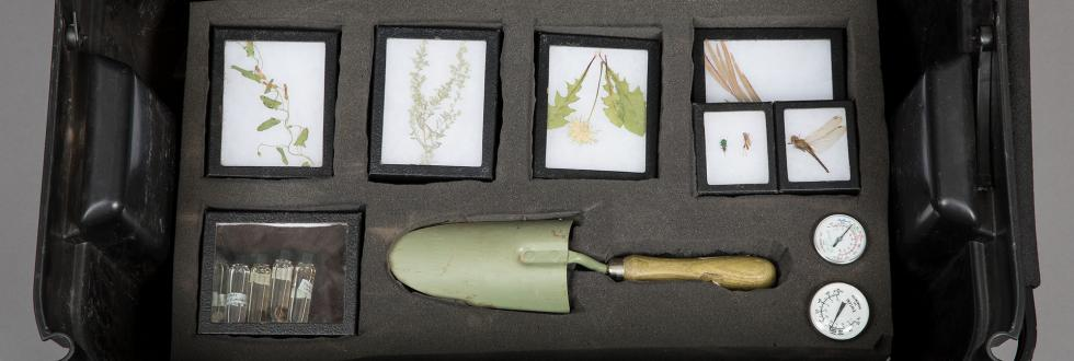 A selection of plant samples and garden tools in a black box.