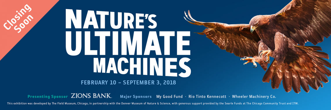 Nature's Ultimate Machines: A special exhibit at NHMU