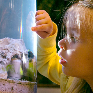 A young girl looks into a tank of water in a museum.