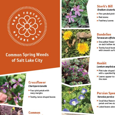 A selection of weeds.